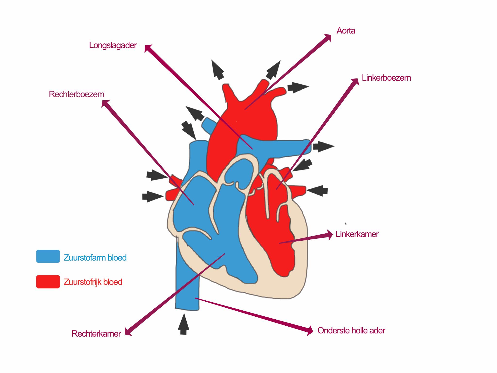 hartruis symptomen